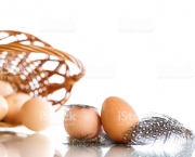 guinea fowl eggs and feathers on a white background